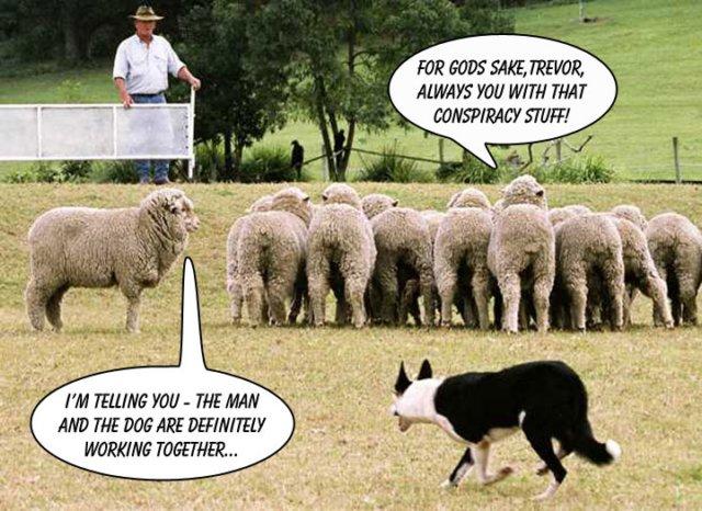 sheep.jpg?w=640&h=466