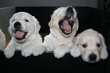 Dog Barks Like Dmx