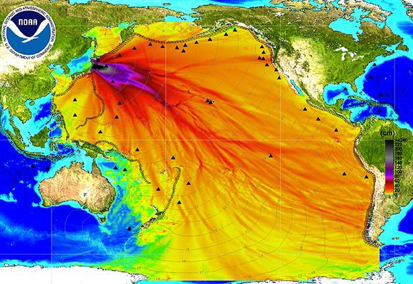 Maximum wave height of the Fukushima tsunami