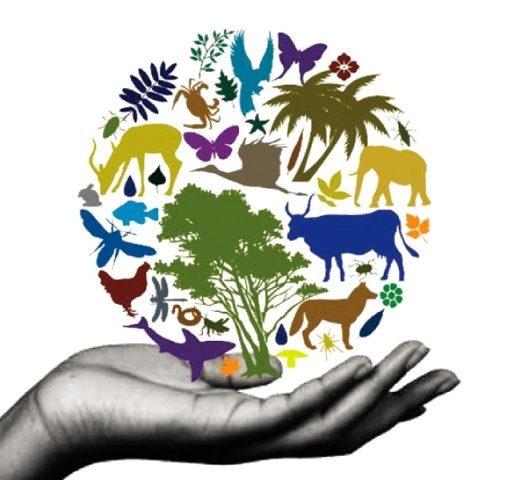 the earths biodiversity and the solution to save the diversity of the earth Crowdfunded campaigns are conserving the earth's  areas like biodiversity  scale it offers a powerful solution for mobilizing resources.