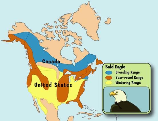 2013 Map Eagles Live Bald Where Do