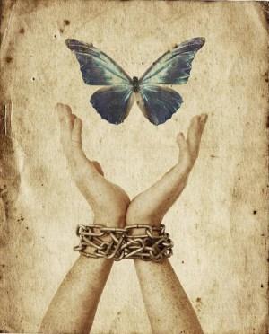 Free Butterfly