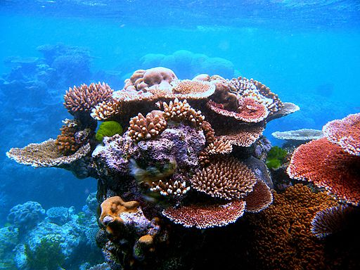 Coral Outcrop on Flynn Reef By Toby Hudson