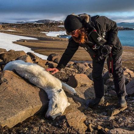 Dead polar bear. Photo by Paul Nicklen.